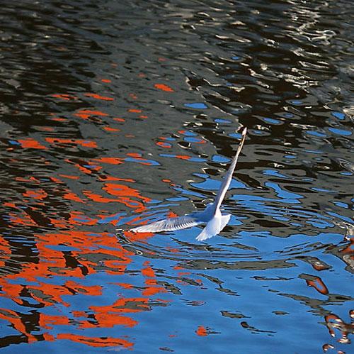Игра цвета в воде и чайка