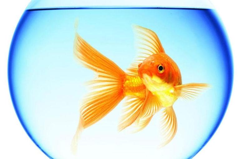 аквариум с рыбкой
