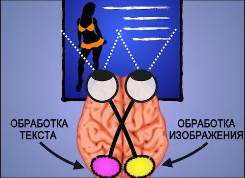 Обработка информации полушариями мозга