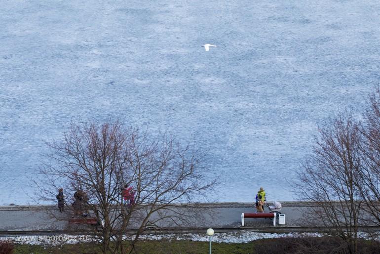 Как спасают лебедя на пруду в Гольяново